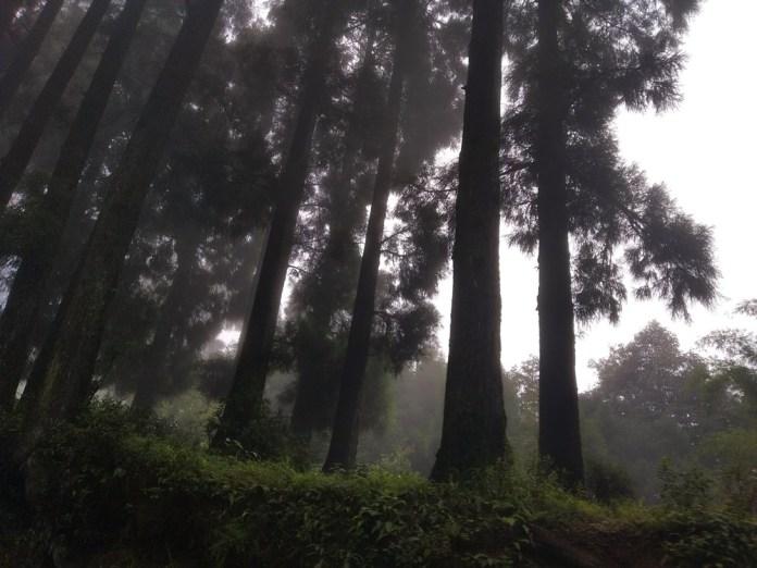 ঢাকা - কলকাতা - দার্জিলিং - ভ্রমন বৃত্তান্ত 21