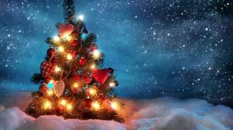 christmas_tree_snow_winter_91151_1920x1080