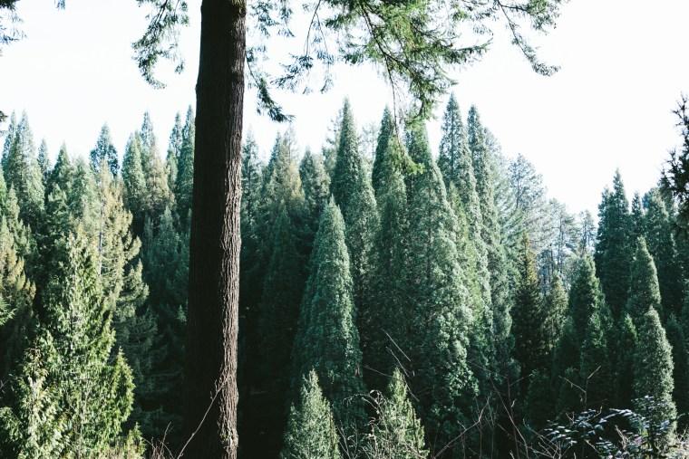 Portland_Blog-4