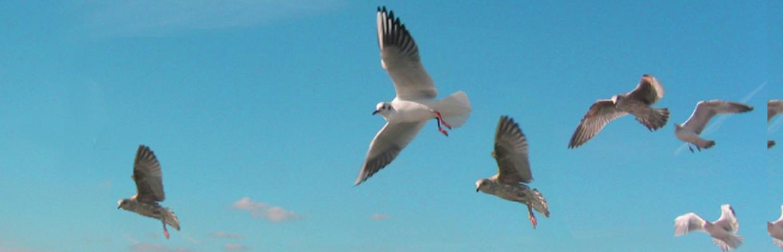 DJH-Contact-Seagulls