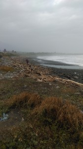 driftwood at beach near 'atolan, october 2014. djh