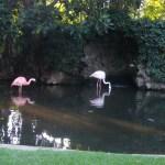 2008 Adelaide Zoo Australia