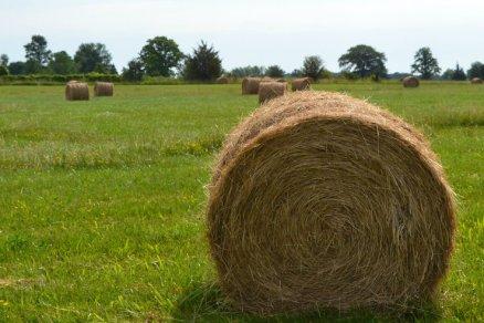 Hay Field - Picton, Ontario
