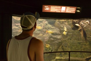 Mike looking at the Indomalaya Fish Tank
