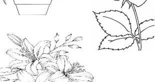 Gambar Flora Yang Mudah Untuk Di Gambar