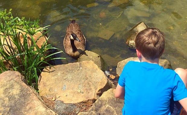 boy and goose saying hi
