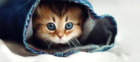 قط صغير كيوت