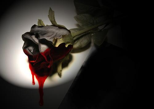 Rosas rojas. (3/3)