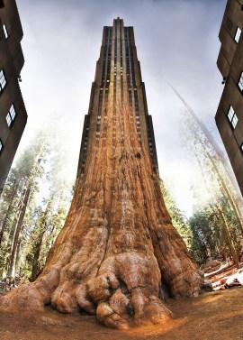 tree-scraper-joel