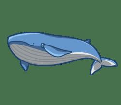 p348_whale