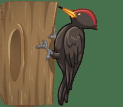 p374_woodpecker