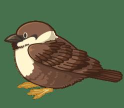 p384_Sparrow
