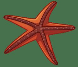 p393_starfish