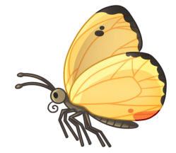 p397_butterfly
