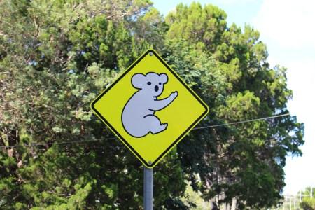 Señal koala