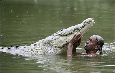 تمساح غول پیکر