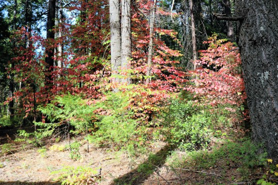 more dogwoods pic