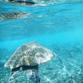 turtle leaving