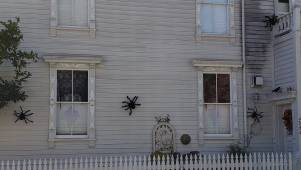 real spiders on house