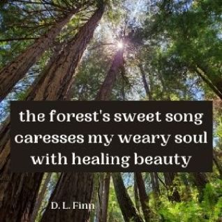 picture of redwood forest and a poem. the forest's sweet song caresses my weary soul with healing beauty.
