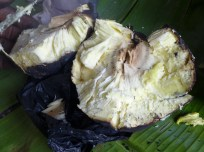 the inside of the breadfruit