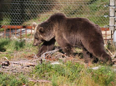 Bearpark_img_4765_blog