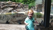 Rhys enjoyed watching the playful penguins and his favorite animal, zebra!