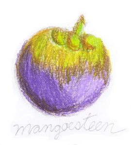 Mangosteen drawing
