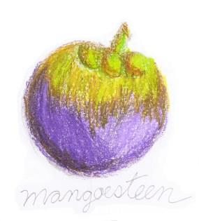 Mangosteen drawing