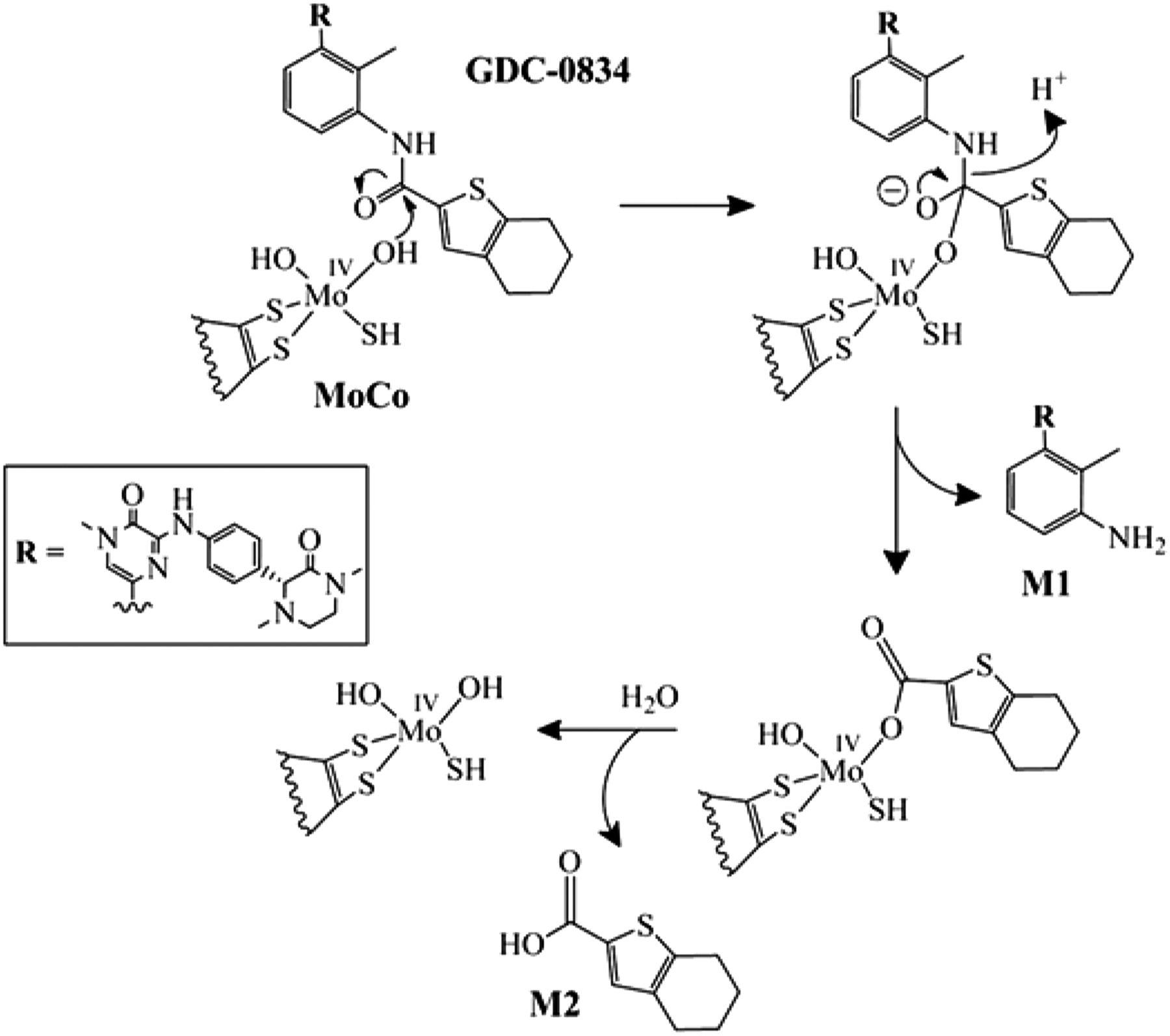 A Novel Reaction Mediated By Human Aldehyde Oxidase Amide