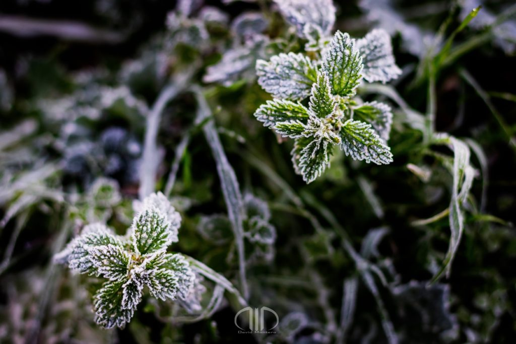 Frío y Escarcha de Invierno DMD Fotografía