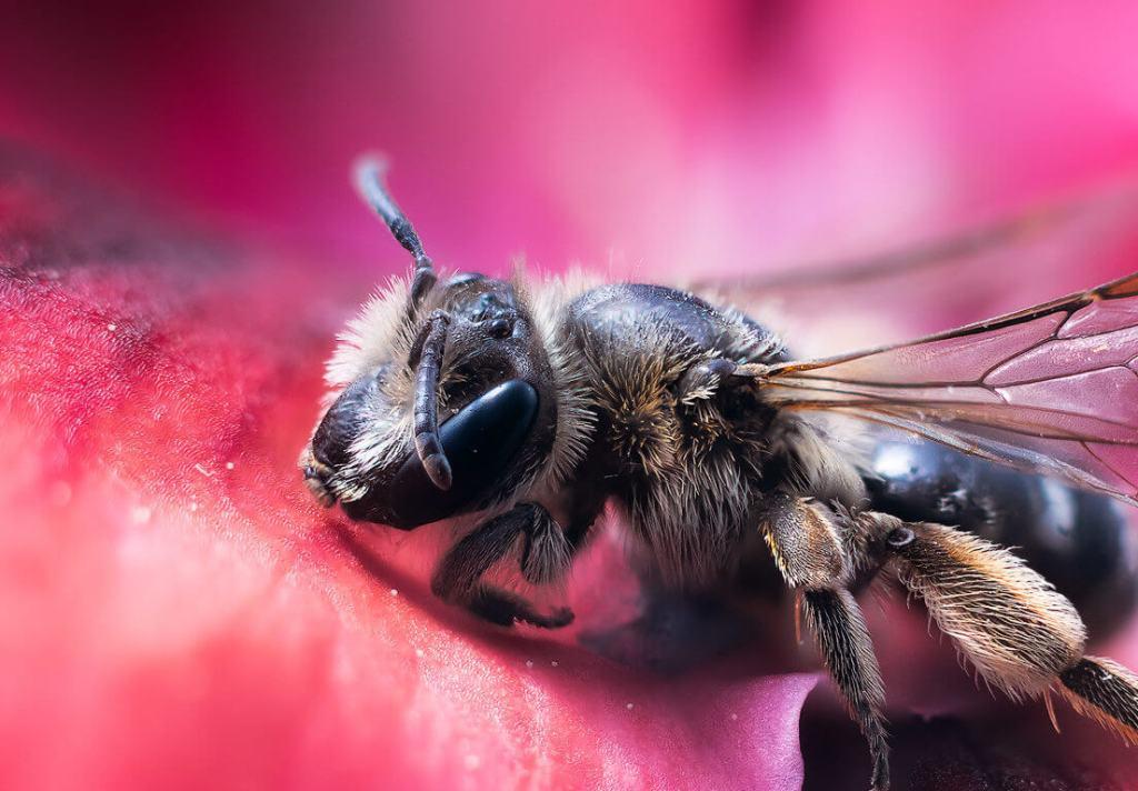 dest S17 Primavera - Probando la fotografía macro con una abeja