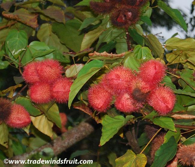 Babel de plantas, frutas y verduras: ¿llegaremos a ponernos de acuerdo? (2/6)