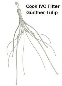 gunther-tulip