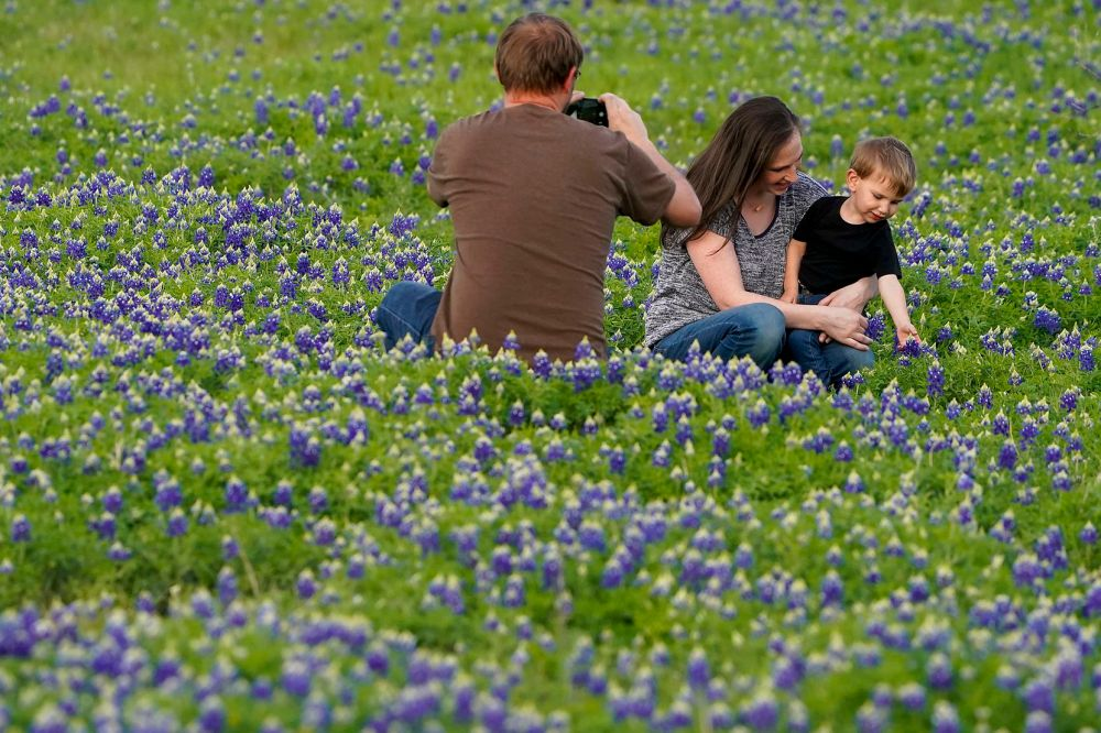 John Wallace photographs his wife, Kim, and his son Ryan, 3, into the air in a bluebonnet patch near Zion Cemetery in Frisco. Ryan gets his picture taken there every year.
