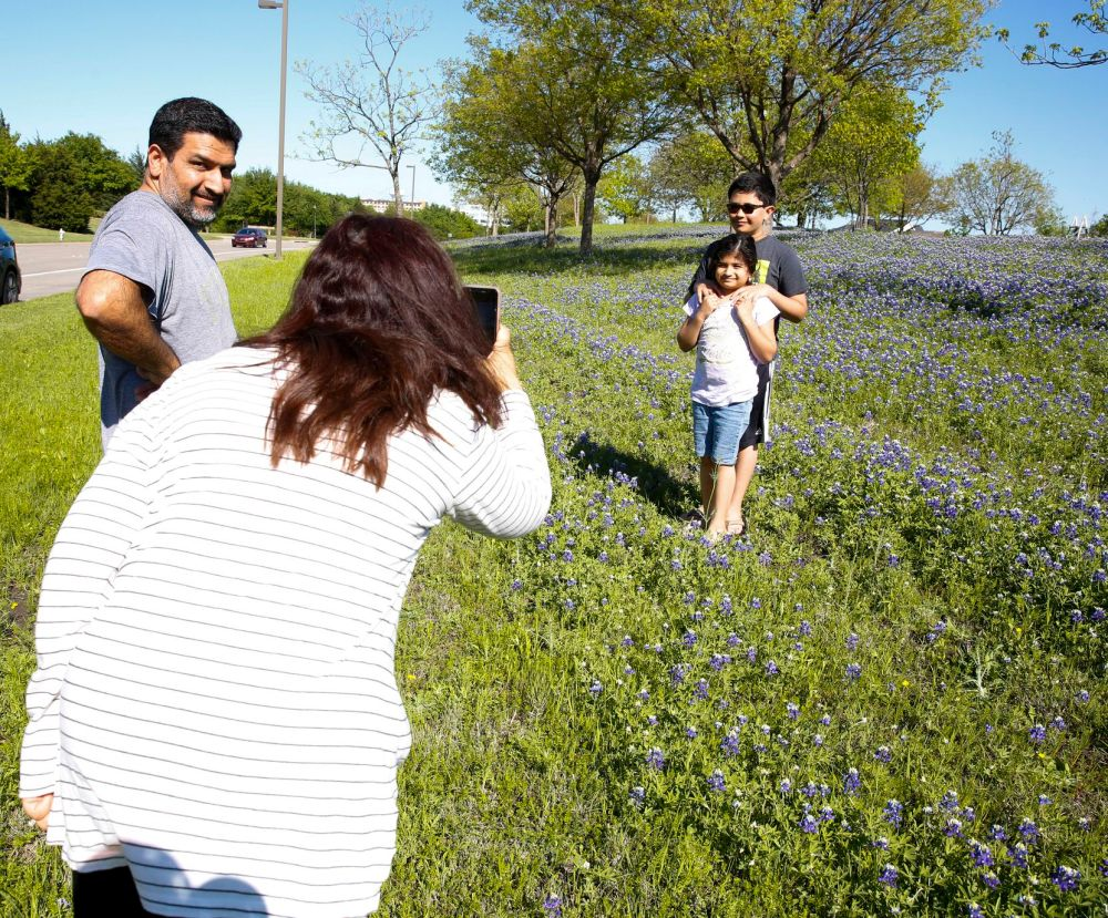 Taking part in a Texas ritual, Seems and Salmon Kerai photograph kids Sinan and Safiya in the bluebonnets on a median on West Bethany Drive in Allen.