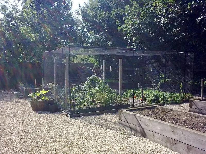 DMW Landscapes Vegetable Garden 3 1