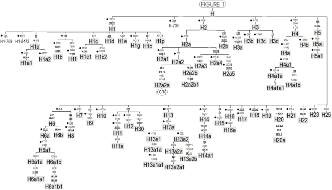 What is a Haplogroup? | DNAeXplained – Genetic Genealogy