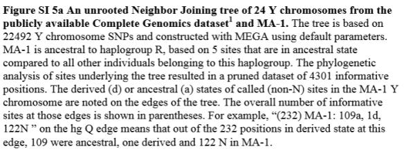 native flow r tree text