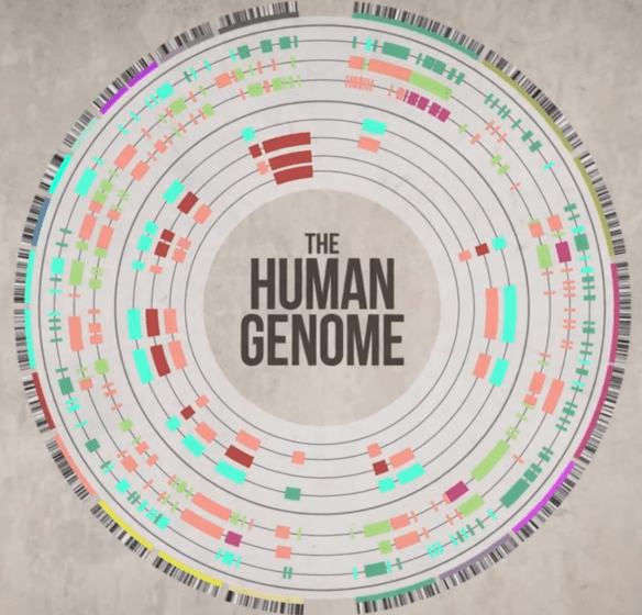Ted Ed Human Genome