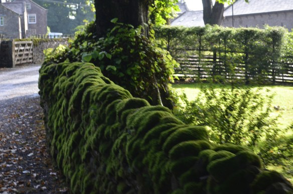 Rock wall moss