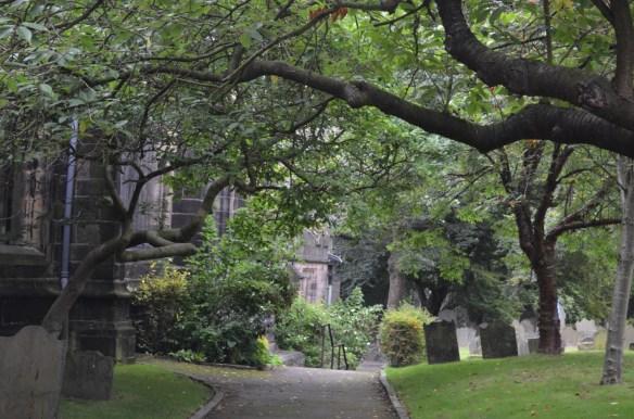 St Wilfrid tree