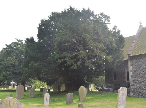 st nicholas ringwould churchyard9