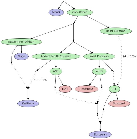 Lazaridis tree