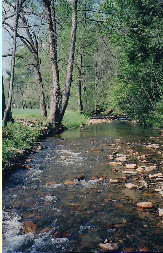 North Fork Reddies River