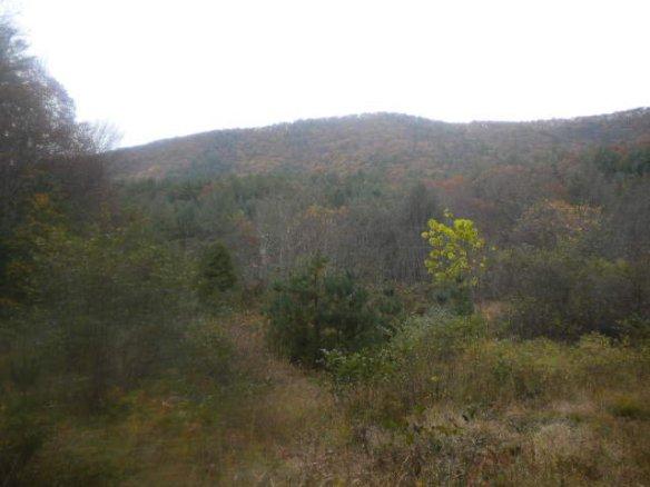 brush creek in the fall