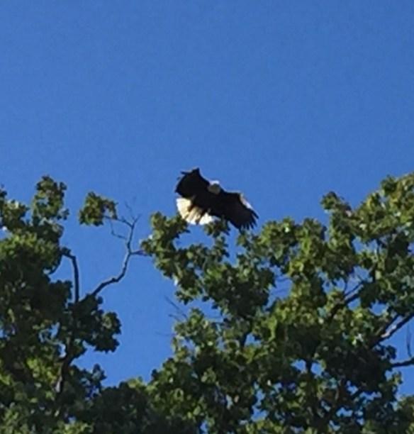 Combs wife eagle 2