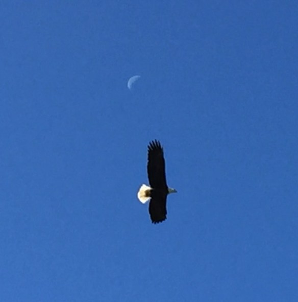 Combs wife eagle 3