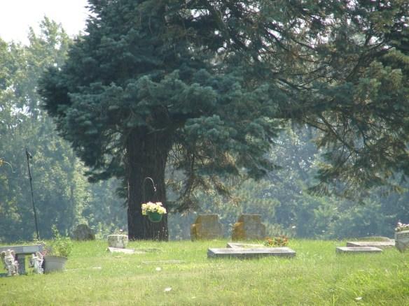 Dechsel Riverview tree
