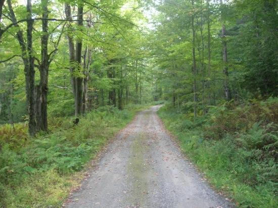 Hillsboro road